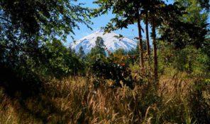 Venta Terreno Para Proyecto Turístico camino Villarrica Pucón