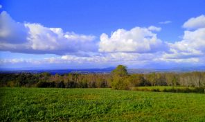 Venta Terreno 10,5 hectáreas Villarrica -Freire Catrico